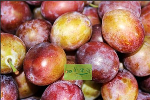 Сливы Свежие фрукты фруктовый сад импортирует фрукты ximeiyanglizi железа детоксикации теряя 3 фунтов