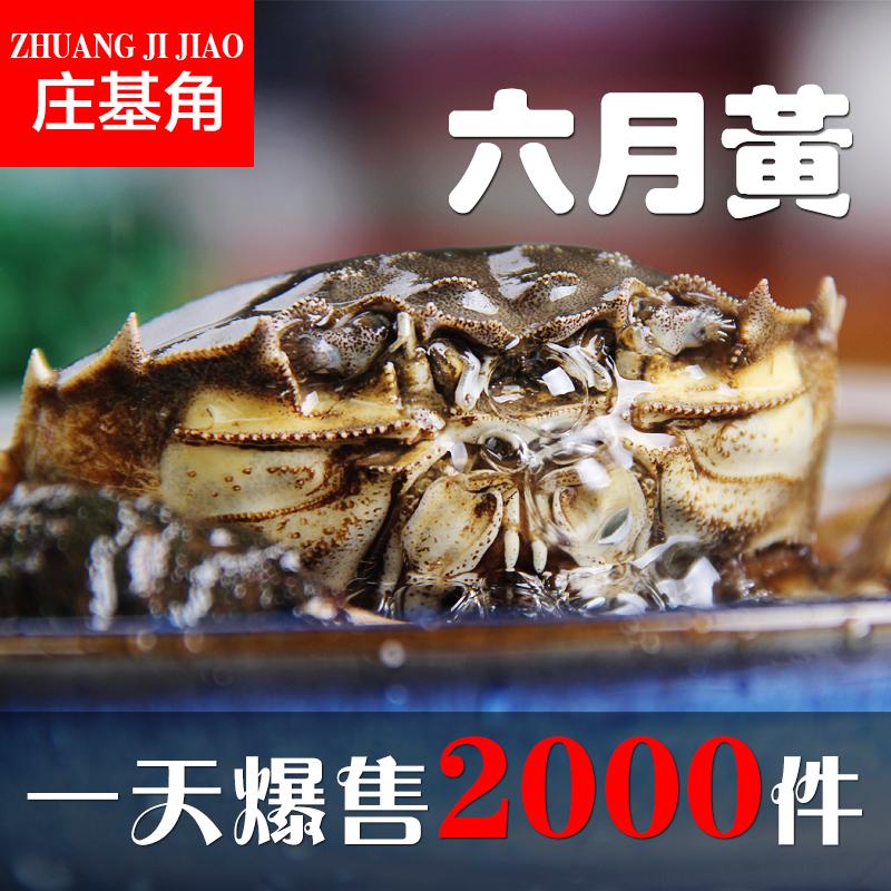 ZJJ 2.6-3.0 10 zhuang le