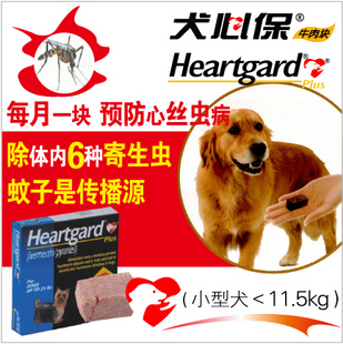 Наркотики Canine heart 600 impacted canine an overview