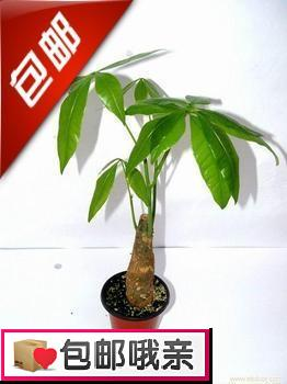 Декоративное мини-растение Mini money tree feng shui natural citrine gem stone money tree 9 inch yellow crystal money tree
