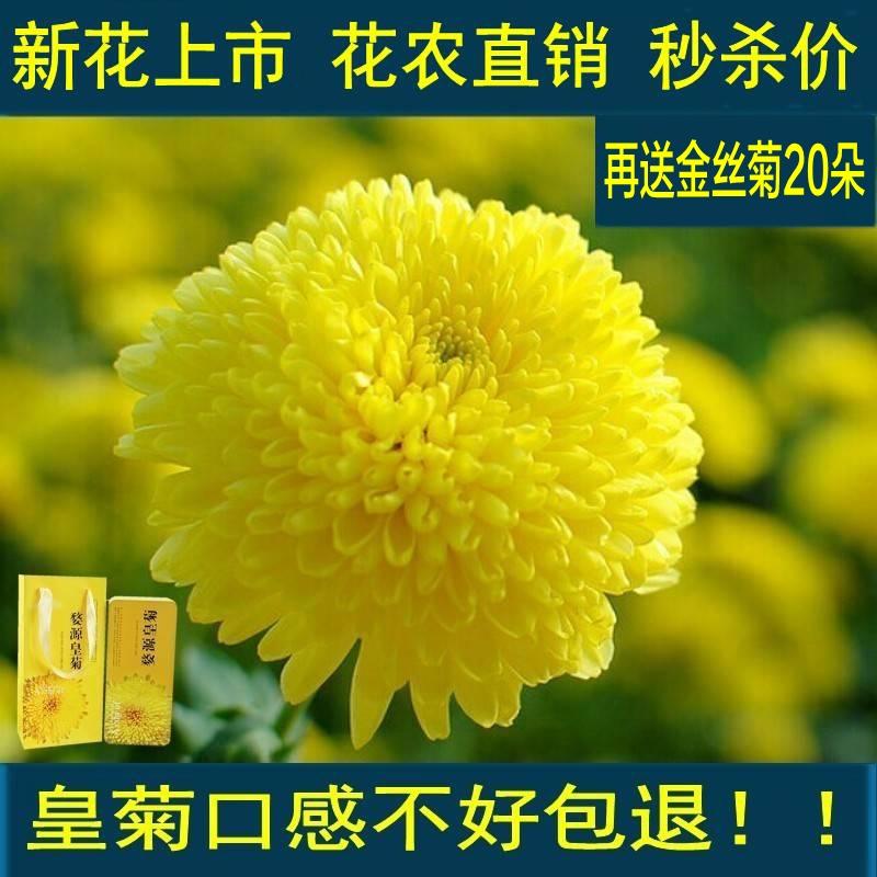 Zhang Lilong основание butterfly zhang jike super zlc
