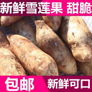 年货云南特产 新鲜雪莲果5斤装 晶薯菊薯神地参果新鲜水果 包邮