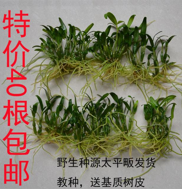 Крупномасштабные посева трав семена/саженцев крупномасштабные посадки дерева семена семена лампы