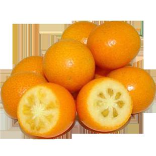 【5斤】小金桔广西新鲜黄皮小桔子麻皮金桔脆皮金桔金橘孕妇水果