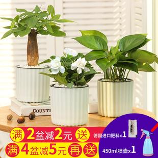 绿箩芦荟栀子花卉观花绿植水培室内小盆栽多肉植物发财树富贵文竹