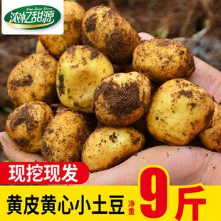贵州威宁新鲜土豆农家自种迷你小土豆高原蔬菜马铃薯带箱10斤批发