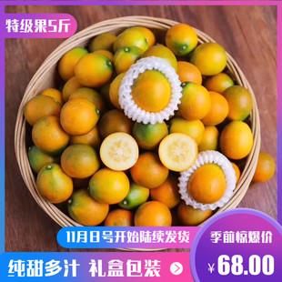 【特級果5斤】新鮮水果廣西融安滑皮金桔非桂林脆皮甜心金橘大果