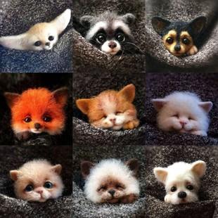羊毛毡戳戳乐手工DIY材料包动物 猫咪杜宾狗浣熊狐狸胸针材料包