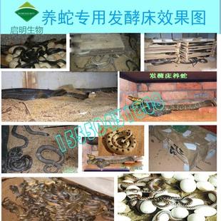 豬菌粉養蛇發酵床菌劑撒式em菌發酵床養雞養異位發酵床菌種幹