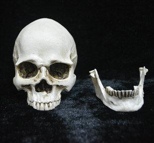 万圣节鬼节用品 整蛊搞怪创意玩具 恐怖骷髅头道具 牙齿分离头骨