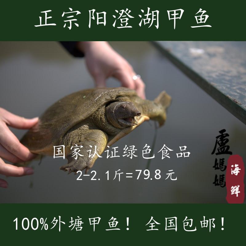 Черепаха   1000g 1000g 50