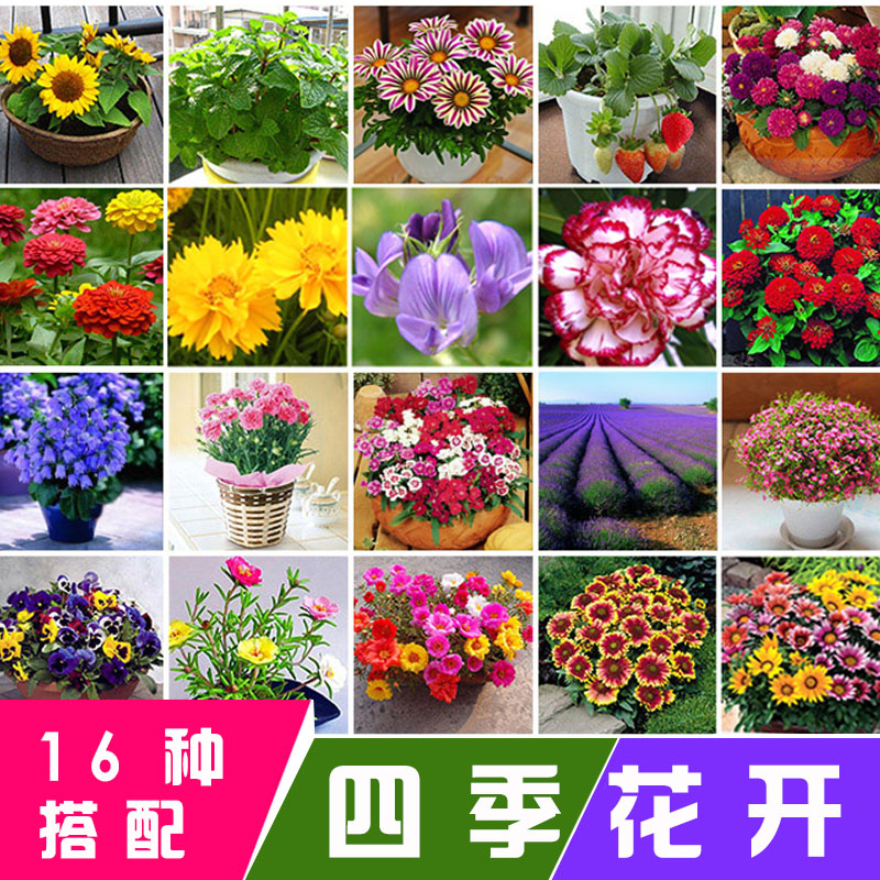 适合冬天种的花种籽子包邮四季室内易活冬季花种子易种活盆栽种子
