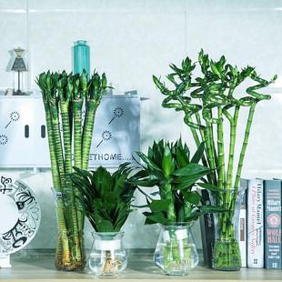 富贵竹观音竹转运竹水培植物龙竹水养花卉盆栽开运竹四季常青绿植