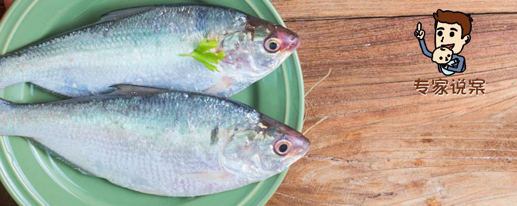 什么样的鱼和海鲜适合给宝宝吃?