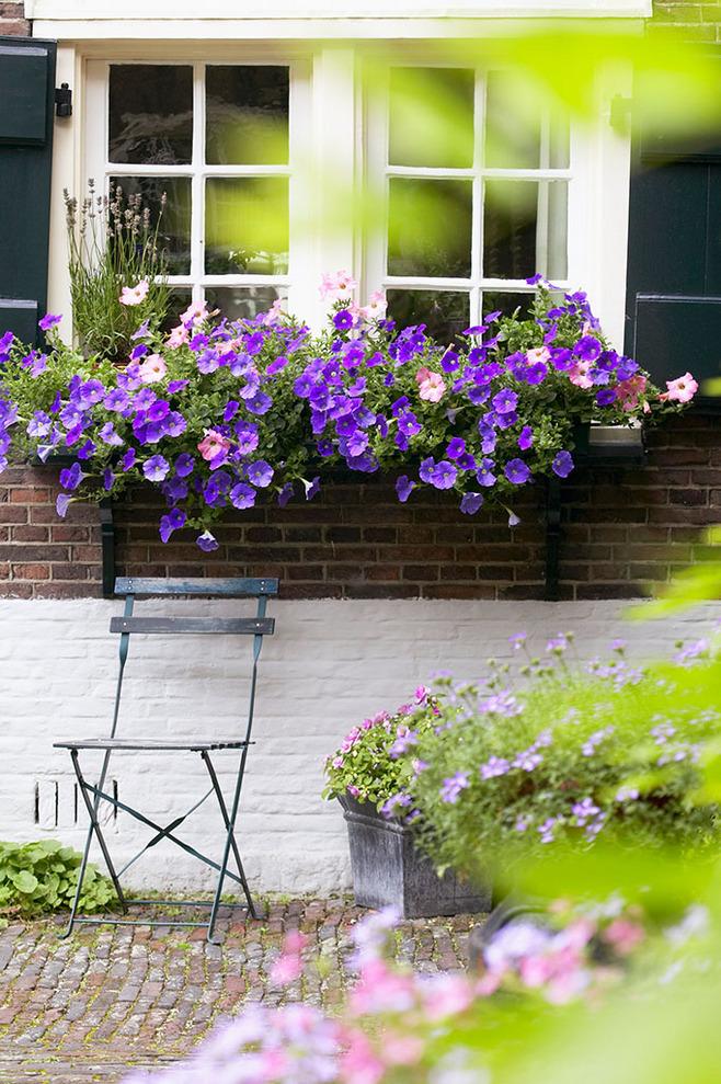 3种植物就能打造爆美的阳台悬吊花瀑