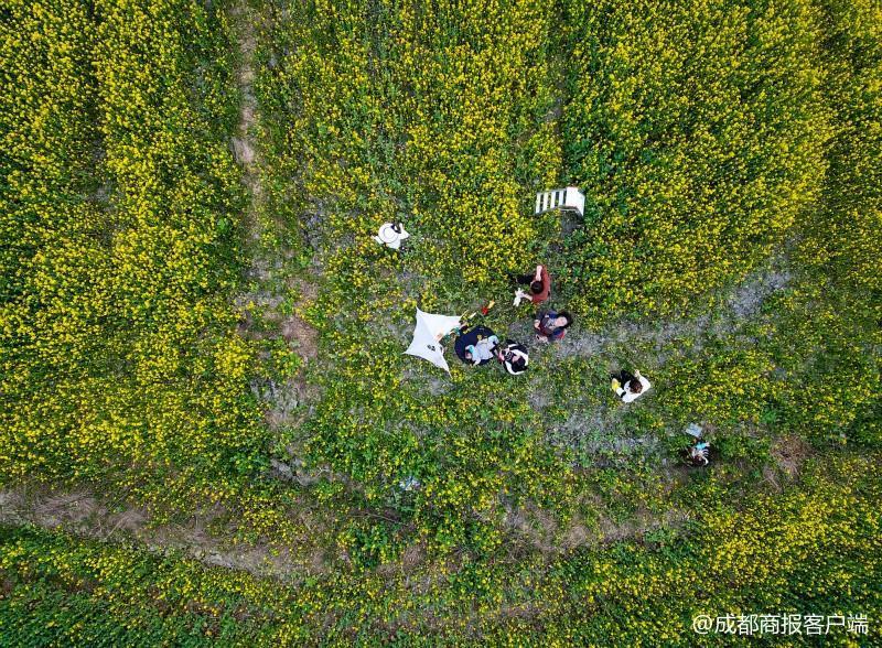 视频又到油菜花开的季节中国最美