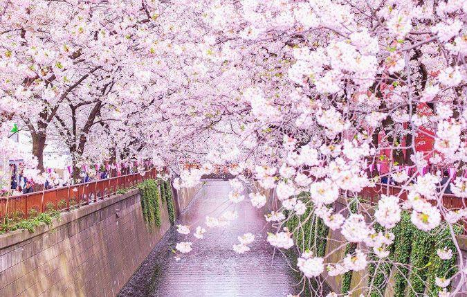 重庆这儿的早樱开了美食美景够你