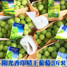 Three Kinds of Sunshine Rose Grape Fresh Extract from Qingwang Grape