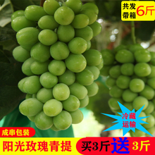 Fresh Yunnan Sunshine Rose Grape Fresh Fruit Fragrance Printing Seedless Green Raisin Feiqing King Box 6 Kinds
