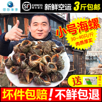 Qingdao wild small conch fresh sea snail that day is digging live conch seafood shellfish products 500g