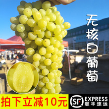 Xinjiang Turpan Seedless White Grape Fresh Fruit Packed Raisins Pregnant Women Seedless Fresh Grapes A Box of 5 Kinds