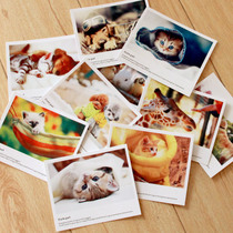 Music pin paper card LOMO card greeting card postcard blessing message small card cats and dogs adorable pet series 10