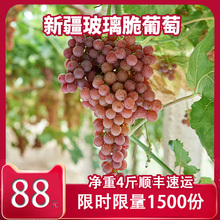 Xinjiang Grape Fresh Fruit Pickup Box Seedless Turpan Special Glass Brittle Flame Seedless Red Pickup
