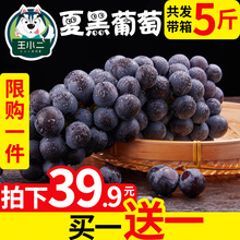 Buy 1 to send 1 Yunnan Summer Black Grape Fresh Fruit Package Mail Season Seedless Black Lift Full Belt Box 5 Kinds of Lift