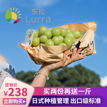 Lela Qingfang Sunshine Rose Grape Fresh Fragrant Printing Blue Extract Seedless Raisin Japanese Qingwang Grape Sanjin