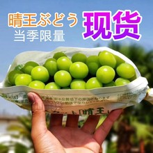 Sunshine Rose Grape Fresh Fragrant Printing Blue Extract Seedless Raisin Japan Qingwang 2 Kinds of Fruit Shunfeng Baoyou in the Season