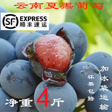 Selected 4 Kinds of Yunnan Seedless Summer Black Honey Fresh Grape Pregnant Women Seasonal Fruit Black Gallon Red Extract