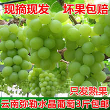Yunnan Maitreya Dongfeng Fresh Crystal Grape Fresh Fruit 3 Kinds Packaged Non-Raisin Summer Black Grape