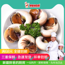 Xinjiang fat dads kitchen Frozen Big snail 500g seafood live aquatic wild Jade snail shellfish products