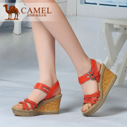 Camel/骆驼 A81037605