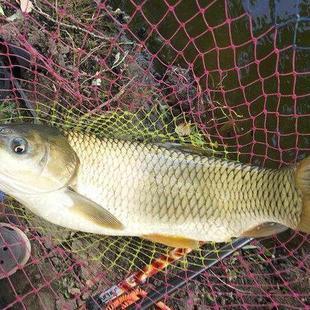 钓草鱼四种常用方法,助你收获大草鱼