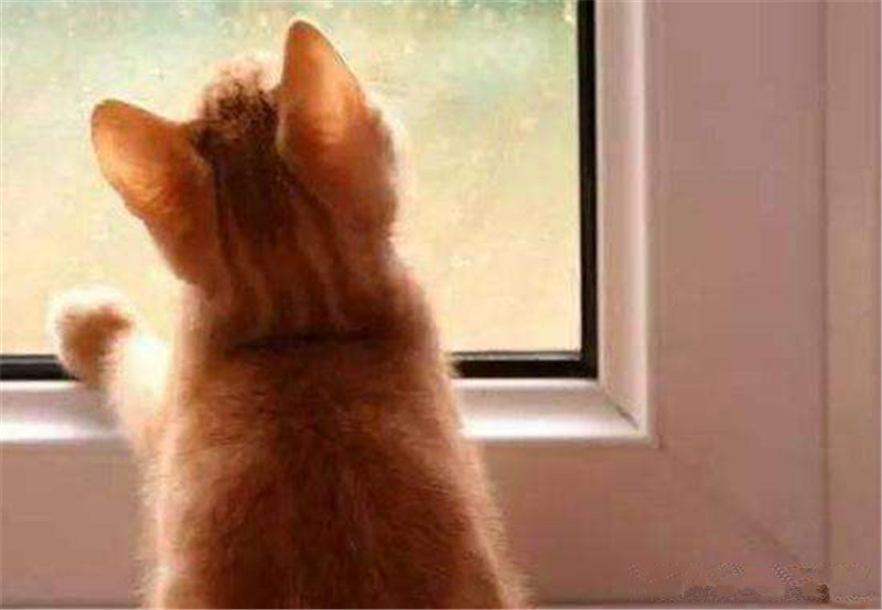4点教你过年怎么带猫咪回家