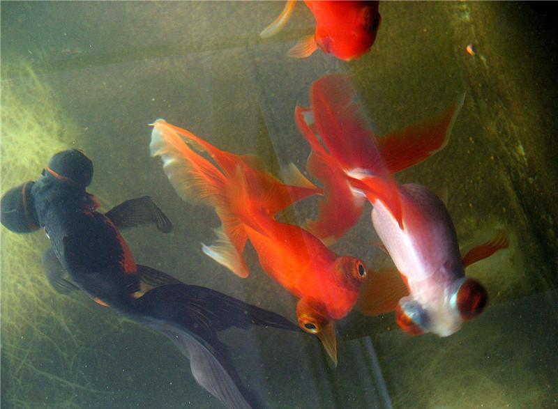 3点告诉你为什么新手养鱼容易养死了16