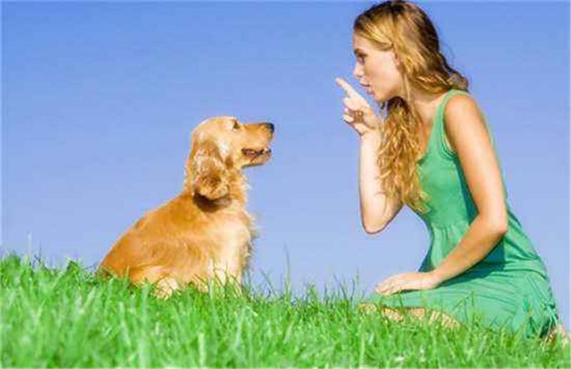 狗狗的叫声有3种含义,你知道吗?5