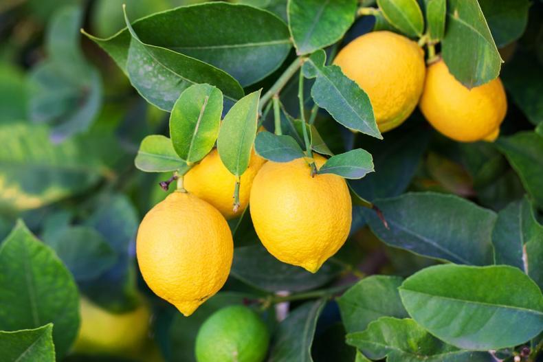 按照柠檬产地挑选