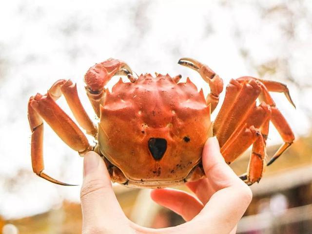 网红咸烤蟹!这美味你绝对没吃过