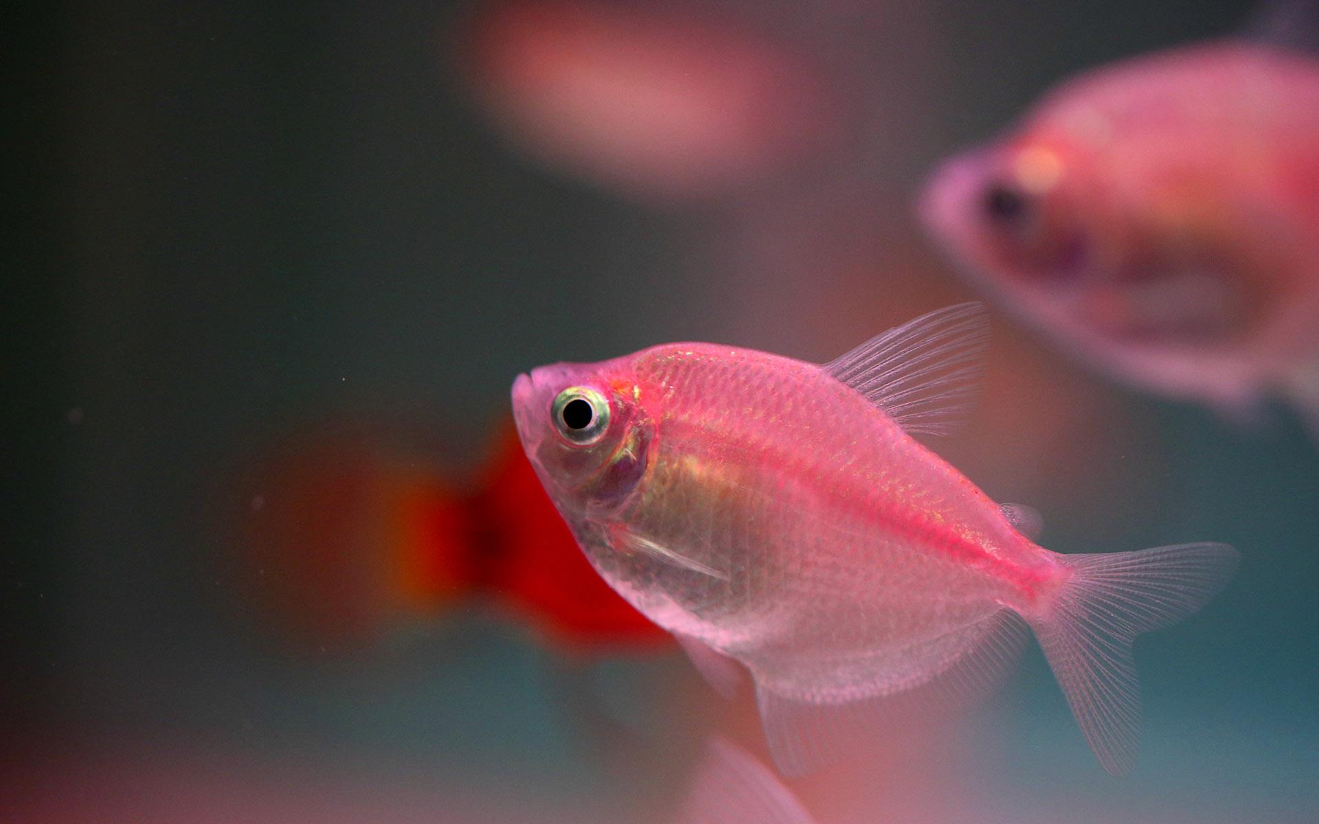 新手养鱼,谨记这五点才能不死鱼!