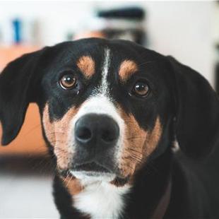 6种行为告诉你狗狗不爱你了