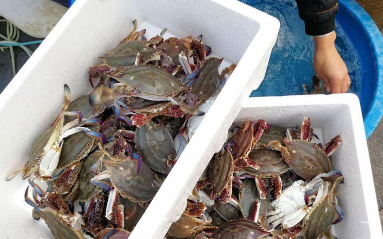 """梭子蟹好吃,但别买到""""外地蟹""""哦!"""