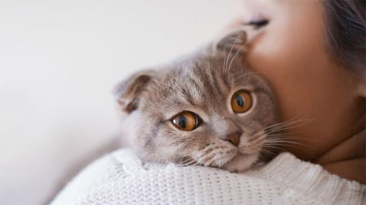3点教你如何安全接触猫咪
