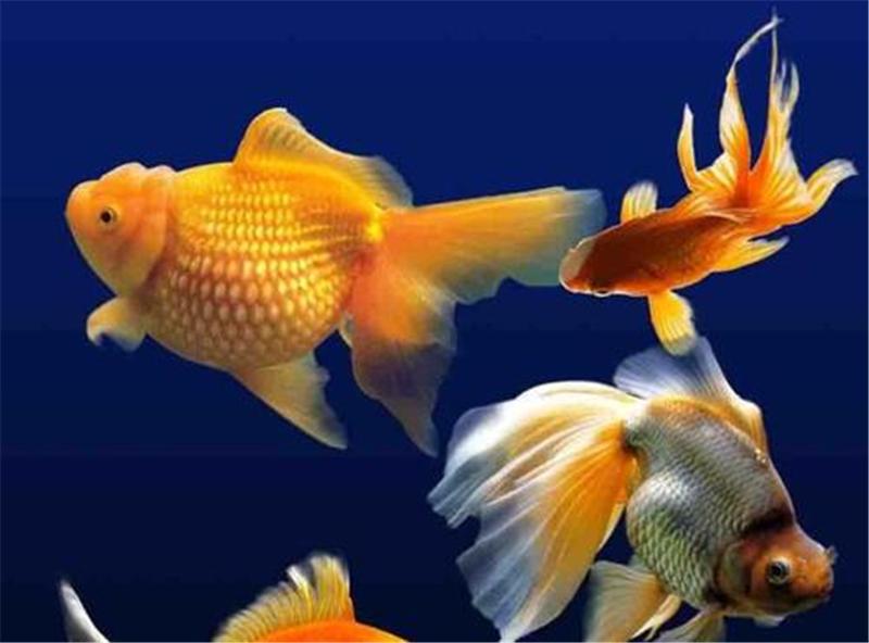 3点告诉你为什么新手养鱼容易养死了19
